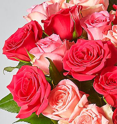 A bunch of pink & red roses