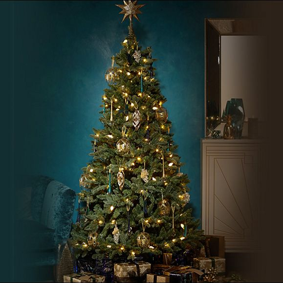 Select your spot - Christmas Tree Buying Guide Christmas M&S