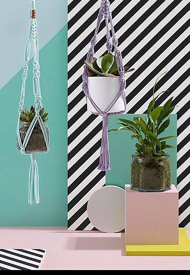 Foliage trio of indoor plants in holders